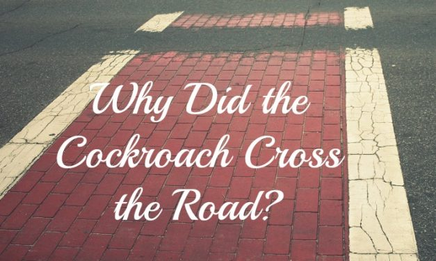 Why Did the Cockroach Cross the Road?