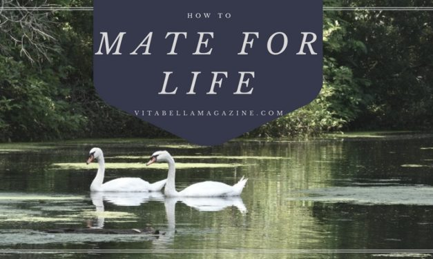 5 Steps to Mate for Life: Marriage Tips
