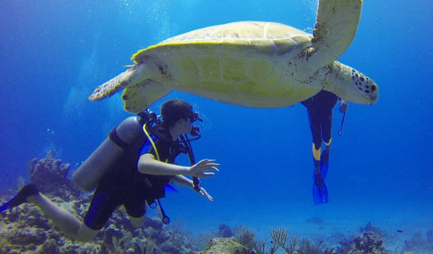 Best Excursions in Grand Cayman for Animal Lovers  [Part 2]